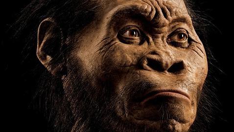 Hallan al posible eslabón perdido entre australopitecos y hombres