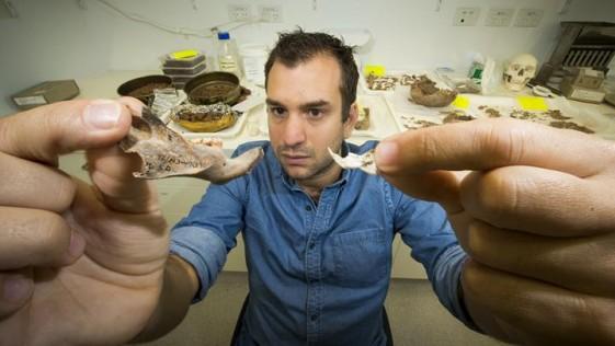 Convivimos miles de años con ratas gigantes