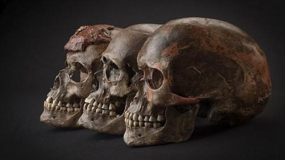 Descubren el linaje que nos convirtió en europeos