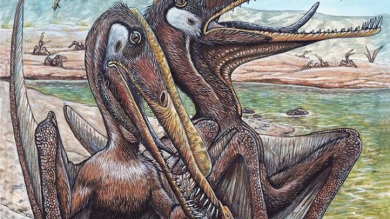 Los pterosaurios también cuidaban de sus crías
