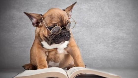 No, los perros no son (tan) inteligentes