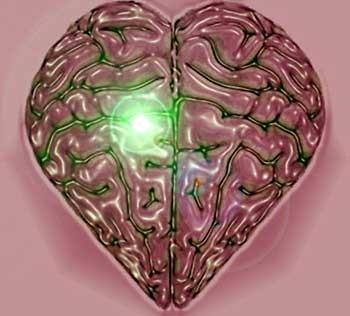 El amor cambia el cerebro