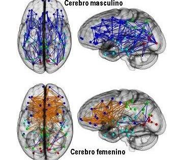 El cerebro femenino está mejor preparado para hacer varias cosas a la vez