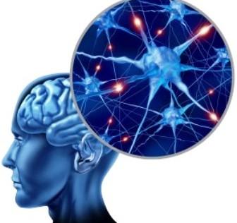 La Fundación Tatiana Pérez de Guzmán El Bueno apuesta por la neurociencia española