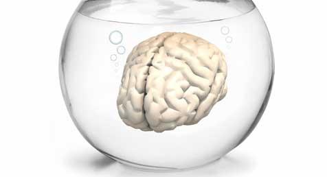 El cerebro de los adolescentes en riesgo de abusar del alcohol es diferente