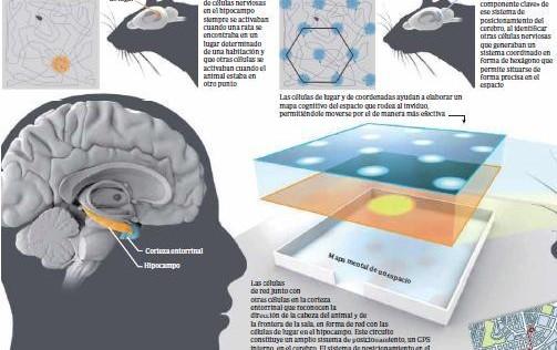 El GPS más avanzado está en el cerebro