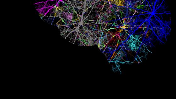 """El secreto de nuestro cerebro, en las """"mariposas del alma"""" de Cajal"""