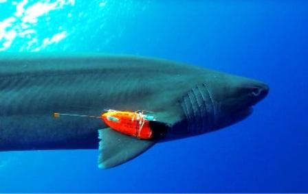La vida secreta de los tiburones, al descubierto