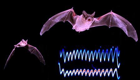 Los murciélagos se boicotean para lograr las mejores presas