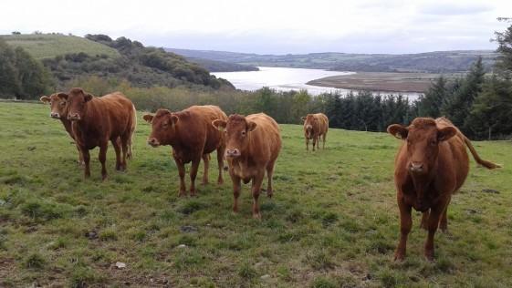 L'Ecrivan, O'Donoghues y otras cosas de Irlanda