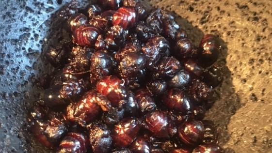 Un gran menú de insectos en Punto MX
