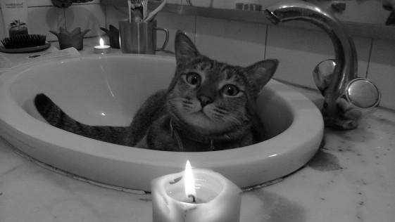 La muerte de «James Dean» enfurece a los amantes de las mascotas
