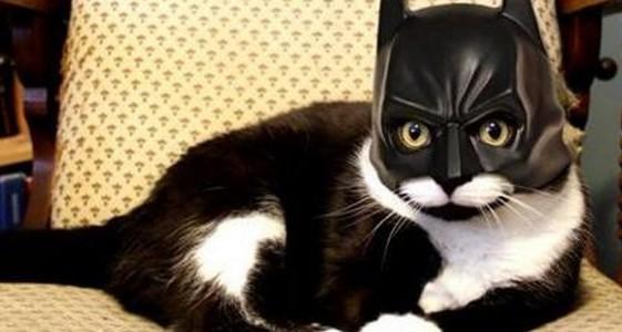 El vídeo surrealista que rinde homenaje a los gatos de Bruselas